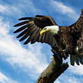 Eagle Landing On A Branch by Eleanor Abramson