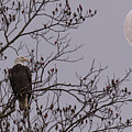 Eagle Lookout by Mark Stephens