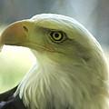 Eagle Majesty by Deborah Benoit