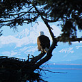 Eagle - Mt Baker - Eagles Nest by Marie Jamieson