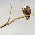 Eagle Nail Biting  by James BO Insogna