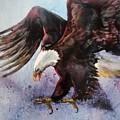 Eagle Of Light by Amy Stielstra
