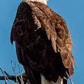 Eagle Of The Salt River by Ronald Hunt