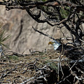 Eagle On The Nest, No. 3 by Belinda Greb