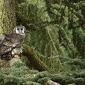Eagle Owl In Forest by Adrian Wale