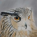 Eagle Owl by Peter Graore