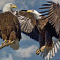Eagle Pair 3 by Larry Linton