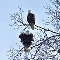 Eagle Pair by John Prickett