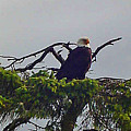 Eagle Perch by Mike and Sharon Mathews