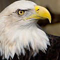 Eagle Power by William Jobes
