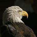 Eagle Profile 1 Original Photo by Ernie Echols