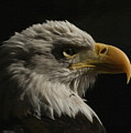 Eagle Profile 3 by Ernie Echols