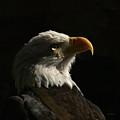 Eagle Profile 4 by Ernie Echols
