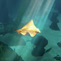 Eagle Ray Underwater by Benny Marty