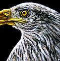 Eagle - Sa96 by Monique Morin Matson