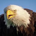 Eagle Stare 2 by Allin Sorenson