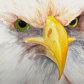 Eagle Stare by Eric Belford