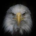 Eagle Stare by Ernie Echols