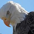 Eagle Stare by Regine Brindle
