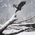 Eagle Takeoff In Snow by Yoshiki Nakamura