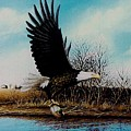 Eagle With Decoy by Anthony J Padgett