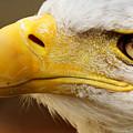 Eagles Eyes by Sue Harper