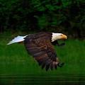 Eagle's Grace by Ian Tolmie