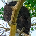 Eagles Of The Salt River by Ronald Hunt