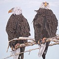 2  Eagles Perched by Sigrid Tune