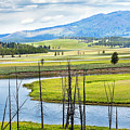 Eagles View, Hayden Valley, Yellowstone by Daryl L Hunter