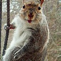 Earl The Squirrel by Robert Orinski