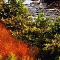 Early Autumn Along The Naugatuck by RC DeWinter