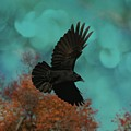 Early Autumn Flight by Gothicrow Images