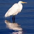 Early Bird Photograph by Kimberly Walker