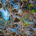 Early Blue Ice  by Desmond Raymond