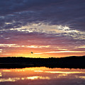 Early Light by Susan Garver