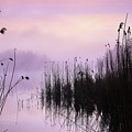 Early Morning By The Pond  by Holger Richter