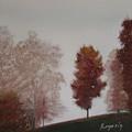 Early Morning Calm by Harvey Rogosin