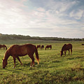 Early Morning Graze by A New Focus Photography