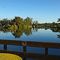 Early Morning In Lakes Park Fort Myers  by Zalman Latzkovich