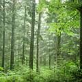 Early Morning In Swiss Forest by Mikhael van Aken
