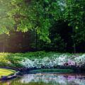 Early Morning Light At The Azalea Pond by Tamyra Ayles