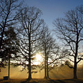 Early Morning Sunrise Through Trees And Fog by Richard Singleton