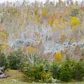 Early Snow Fall by Wanda Krack