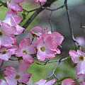 Early Spring Color by Kathy Eickenberg
