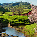 Early Spring In The Valley by Kathleen Bishop