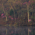 Early Spring Lake Shore by Jeff Phillippi