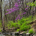 Early Spring On Mill Creek 2 by Jeff Phillippi