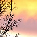 Early Spring Sunset by Will Borden