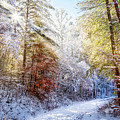 Early Winter's Walk by Debra and Dave Vanderlaan
